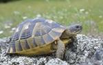 turtle-schildkroete-net